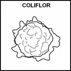 COLIFLOR - Pictograma (blanco y negro)
