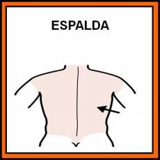 ESPALDA - Pictograma (color)