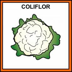 COLIFLOR - Pictograma (color)