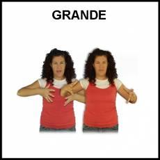 GRANDE - Signo