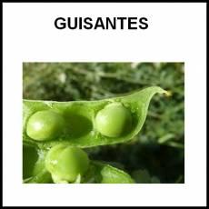 GUISANTES - Foto