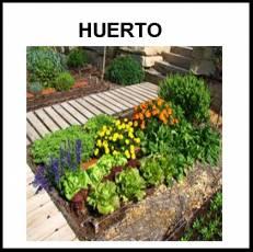 HUERTO - Foto