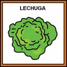 LECHUGA - Pictograma (color)