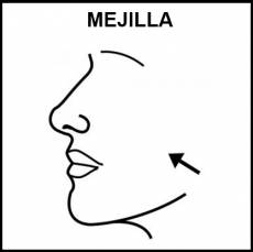 MEJILLA - Pictograma (blanco y negro)