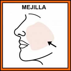MEJILLA - Pictograma (color)
