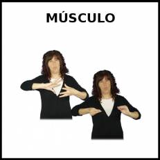 MÚSCULO - Signo