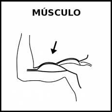 MÚSCULO - Pictograma (blanco y negro)