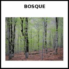 BOSQUE - Foto