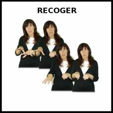 RECOGER - Signo
