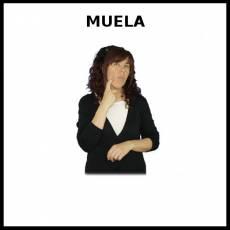 MUELA - Signo