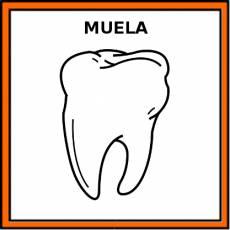 MUELA - Pictograma (color)