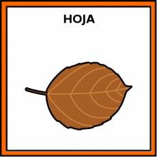 HOJA (ÁRBOL) - Pictograma (color)