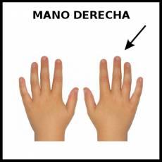 MANO DERECHA - Foto