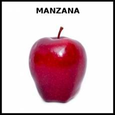 MANZANA - Foto