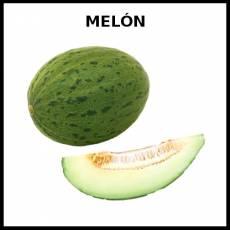 MELÓN - Foto