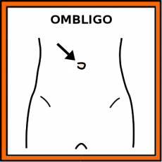 OMBLIGO - Pictograma (color)