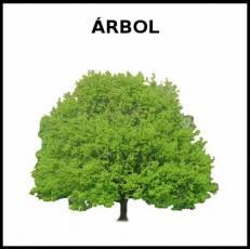 ÁRBOL - Foto