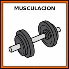 MUSCULACIÓN - Pictograma (color)