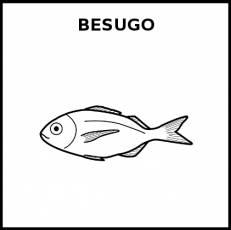 BESUGO (ANIMAL) - Pictograma (blanco y negro)