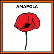 AMAPOLA - Pictograma (color)