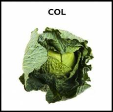 COL - Foto