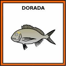 DORADA (ANIMAL) - Pictograma (color)