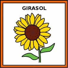 GIRASOL - Pictograma (color)