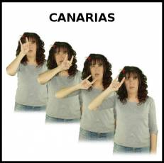 CANARIAS - Signo