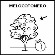 MELOCOTONERO - Pictograma (blanco y negro)
