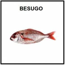 BESUGO (ANIMAL) - Foto