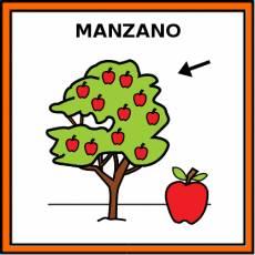 MANZANO - Pictograma (color)