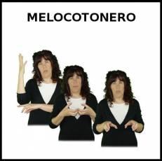 MELOCOTONERO - Signo