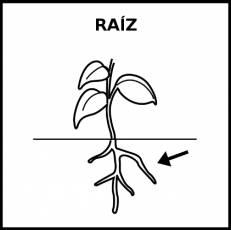 RAÍZ - Pictograma (blanco y negro)