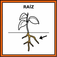 RAÍZ - Pictograma (color)