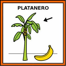 PLATANERO - Pictograma (color)
