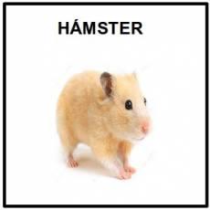 HÁMSTER - Foto