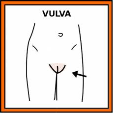 VULVA - Pictograma (color)