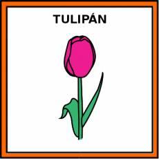 TULIPÁN - Pictograma (color)