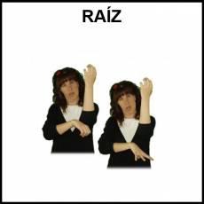 RAÍZ - Signo