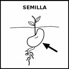 SEMILLA - Pictograma (blanco y negro)