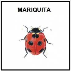 MARIQUITA - Foto