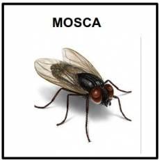 MOSCA - Foto