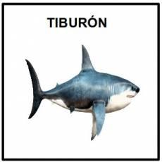 TIBURÓN (ANIMAL) - Foto
