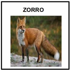 ZORRO - Foto