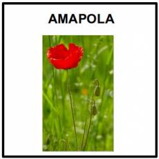 AMAPOLA - Foto