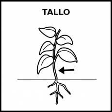 TALLO - Pictograma (blanco y negro)