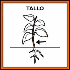 TALLO - Pictograma (color)