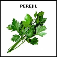 PEREJIL - Foto