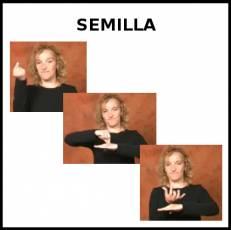 SEMILLA - Signo