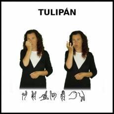 TULIPÁN - Signo